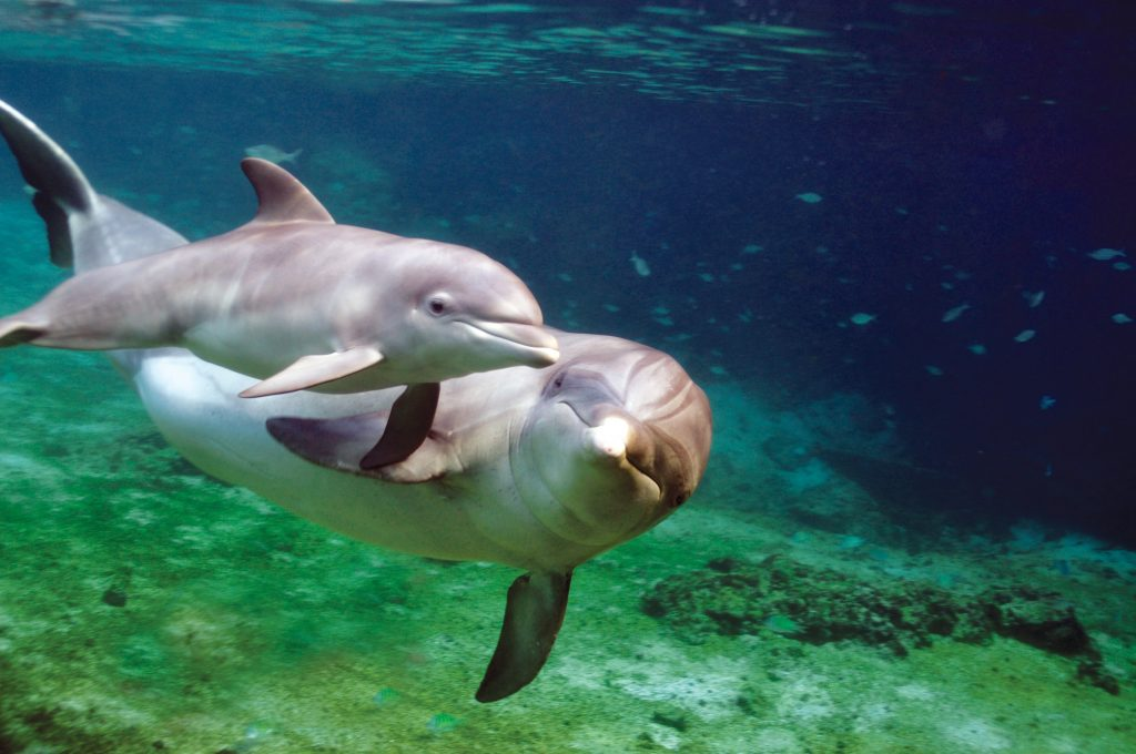 dolphin-quest-dolphins