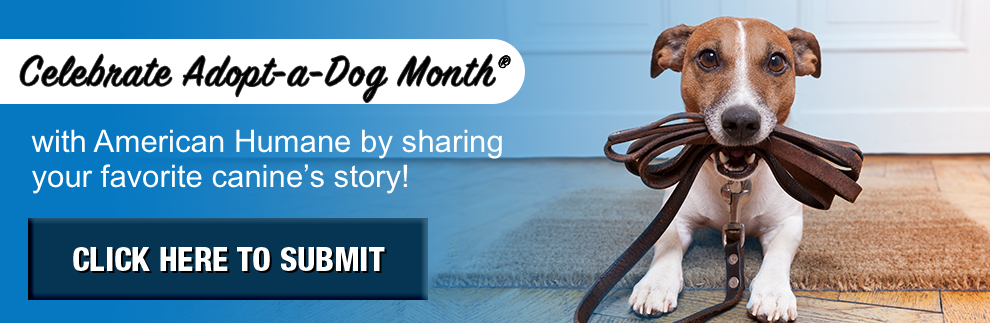 Adopt-A-Dog Month® - American Humane