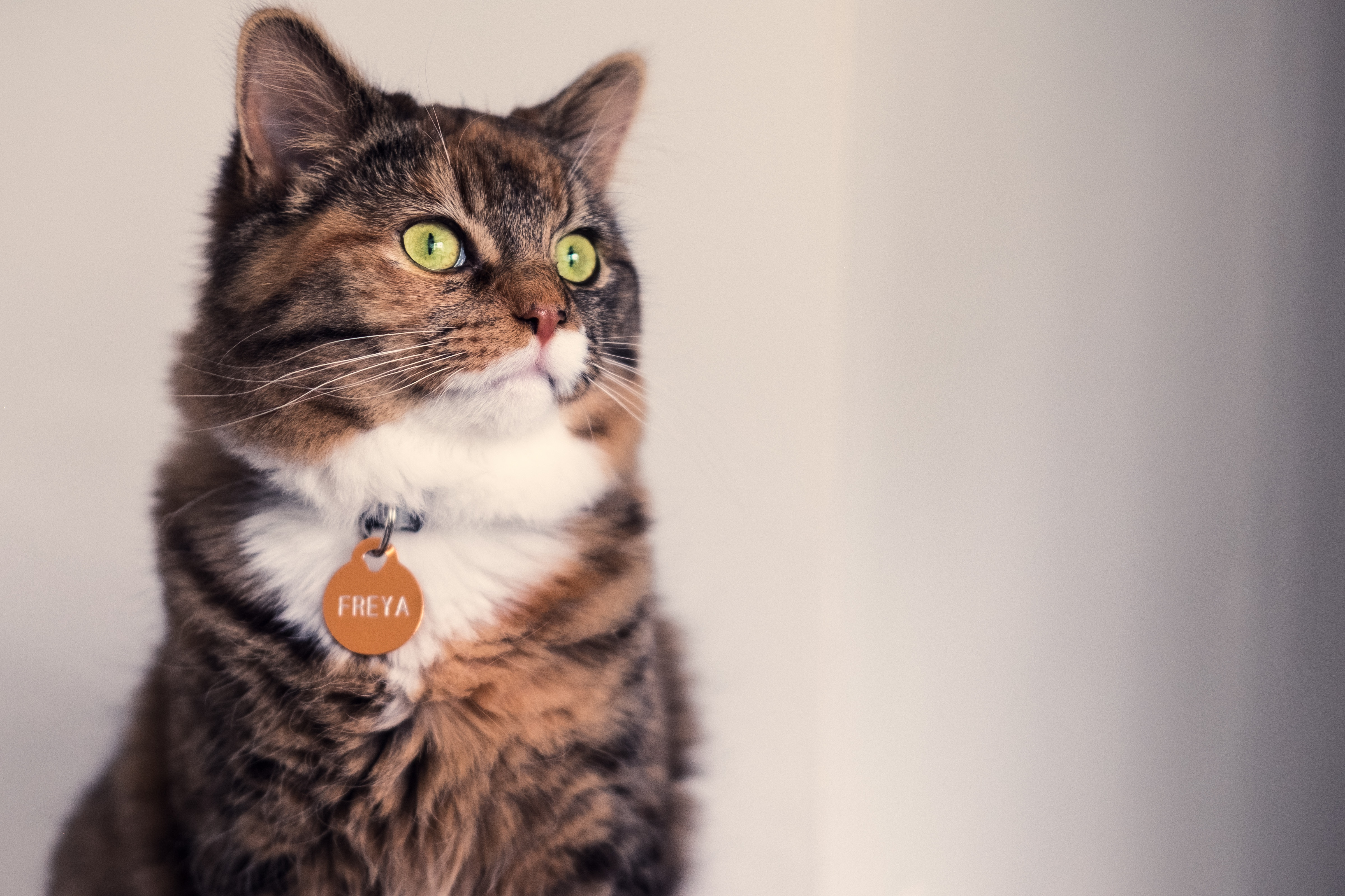 Calico Cat With Interesting Gps >> Choosing A Cat Collar American Humane