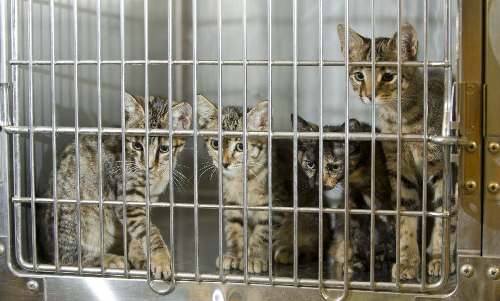 Cat Adoption Events In Ct