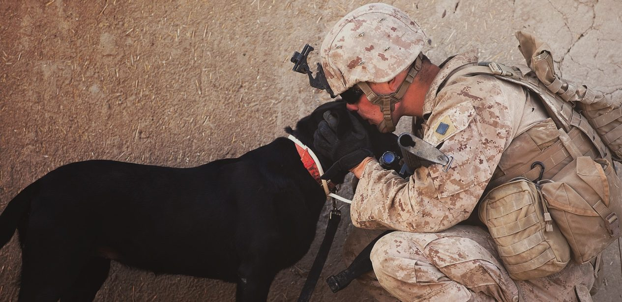 Military dog with its handler