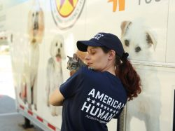 American Humane Service during Hurricane Matthew