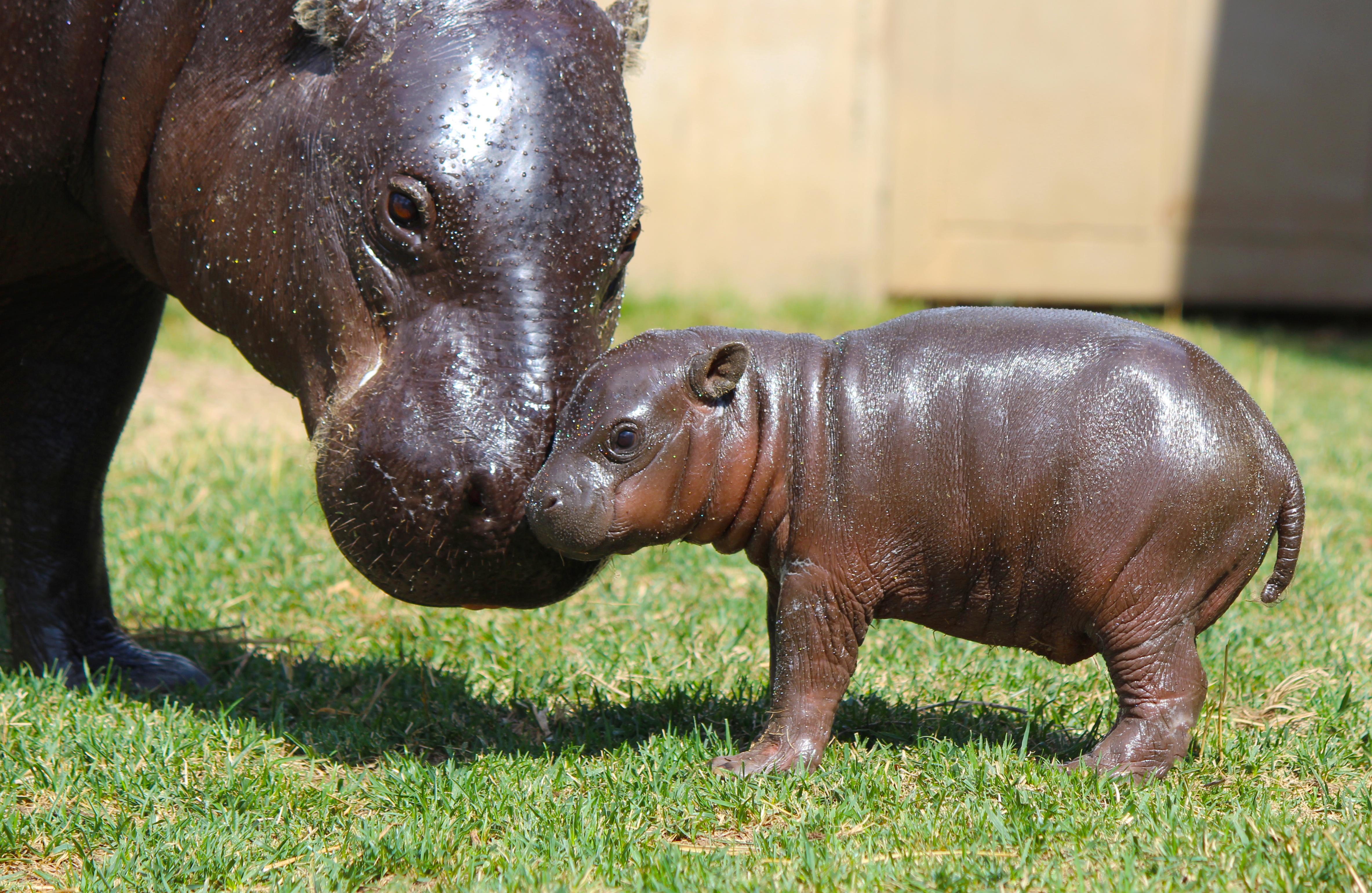 Tanganyika Wildlife Park Achieves Humane Certification for Animal