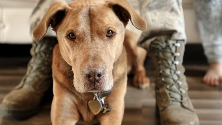 Newsday We Need To Better Serve Military Dogs American